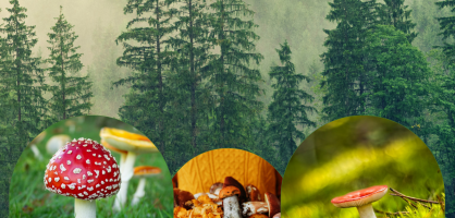 "Näitus ""Seened meie metsadest"""